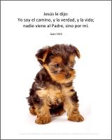 View the image: Cachorro, terrier, Juan 14:6
